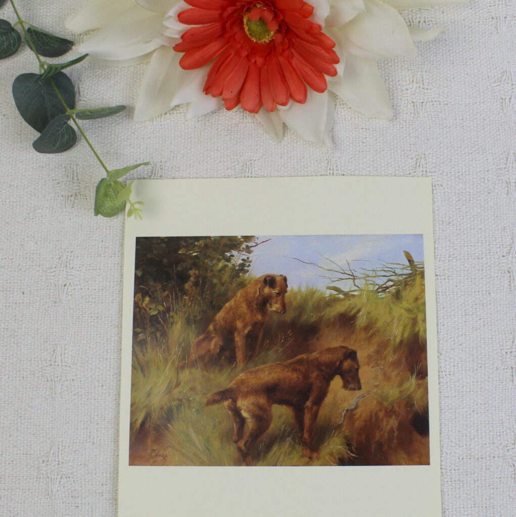 Irish Terriers - Thomas Blinks